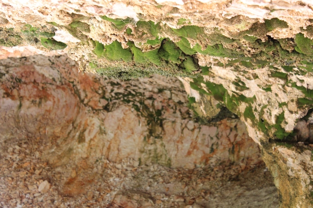 Moss grows on the roof of the cave. If you look close at the photo, you can see the water dripping from the roof.