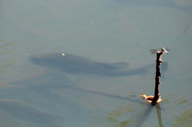 Where's my fishing pole?