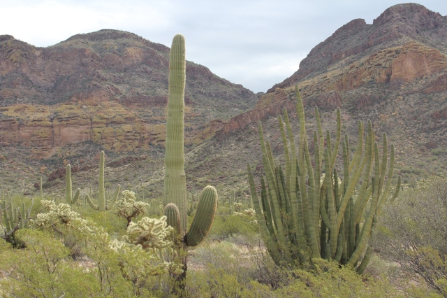 A view of the Ajo Mountains.