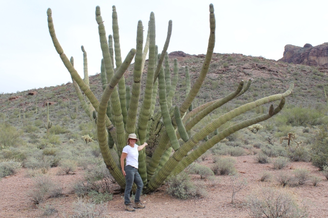 Jeanne pointing out crested organ pipe cactus #1.