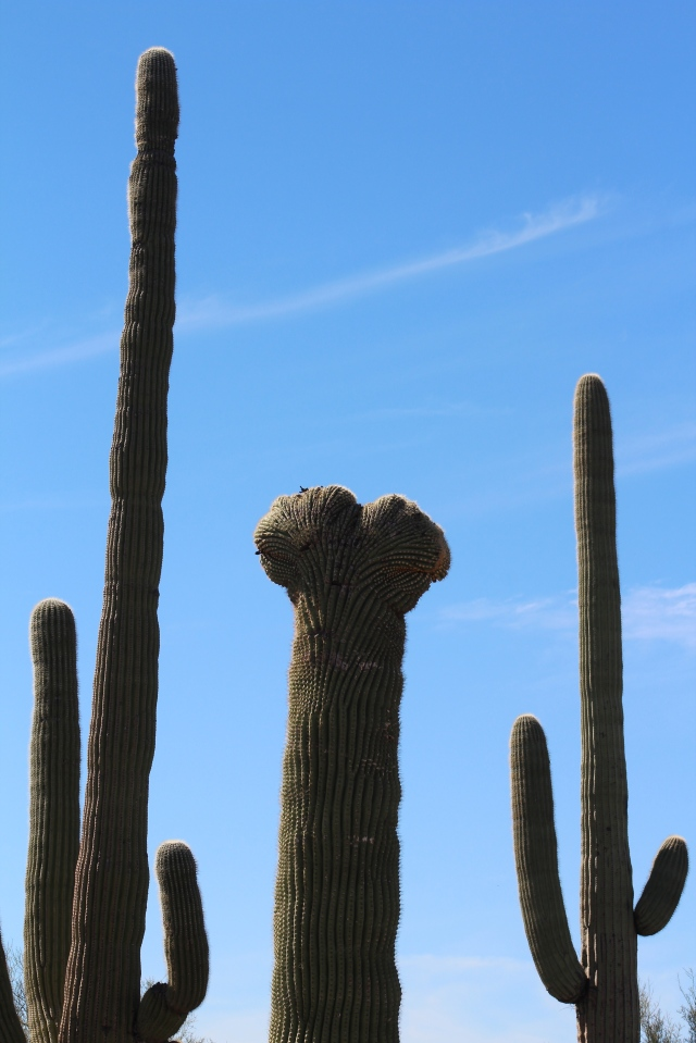 And FINALLY (!) crest #9, a saguaro. Is it time to leave the southwest yet?