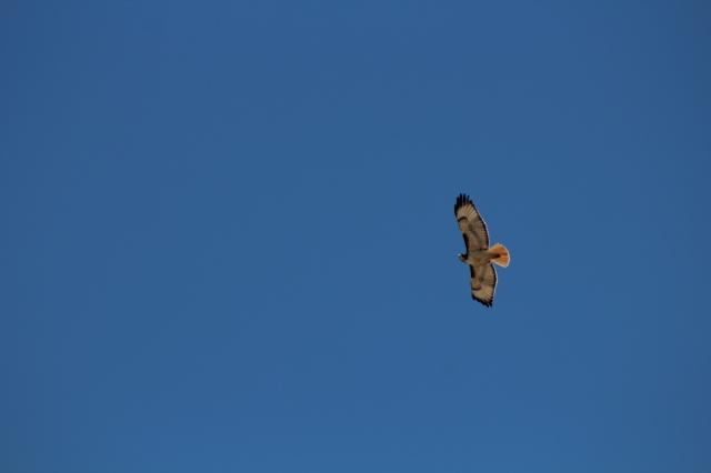 Aerial surveillance.