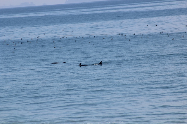 Every morning we were treated to a parade by Flipper and a few of his close friends...