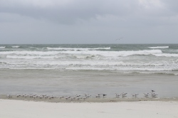 Our first day at Daytona Beach, not real conducive for suntanning...The birds liked it though.