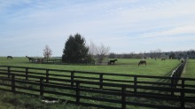 You gotta love these horse farms. Our bike ride afforded us many similar views.