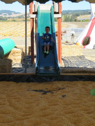 Sliding into the corn pit.