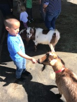 Max liked feeding the goats at the petting zoo.