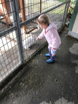 Hailey was drawn to the bunny at the petting zoo like a magnet...